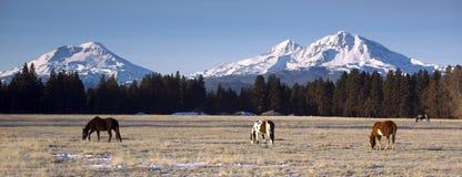 在三座姐妹山俄勒冈基地的大农场动物  库存图片