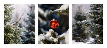 三张相联-圣诞节森林 库存图片