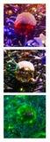 三张相联-红绿灯圣诞节 免版税库存照片