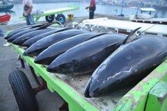 三投斯将军市,菲律宾- 2015年9月5日:金枪鱼是 库存照片