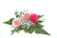 三支康乃馨和大叶子蕨新鲜的花束  库存图片