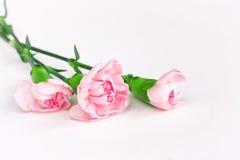 三支桃红色康乃馨,在白色背景的花束 图库摄影
