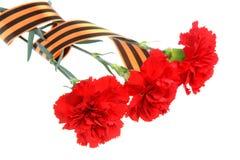 三支红色康乃馨栓与在白色的圣乔治丝带 库存照片