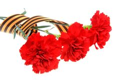 三支红色康乃馨栓与被隔绝的圣乔治丝带 免版税库存照片