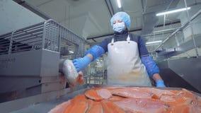 三文鱼内圆角由一位女性专家排序 影视素材