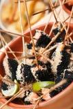 三文鱼和石灰串 库存照片