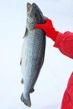 三文鱼在手中户外 免版税库存图片