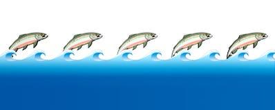 三文鱼游泳向上游 免版税库存照片