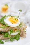 三明治用鸡蛋和水芹 库存照片