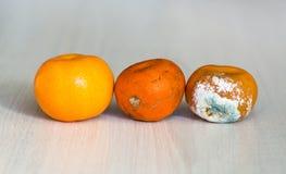 三普通话进入变干的阶段 一个新鲜的桔子,开始恶化的桔子和被损坏的腐烂与模子 库存图片