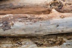三本漂流木头日志-背景 库存图片
