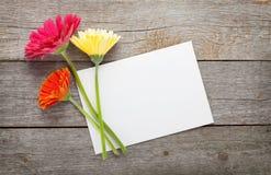 三朵五颜六色的大丁草花和空白的贺卡 免版税库存照片