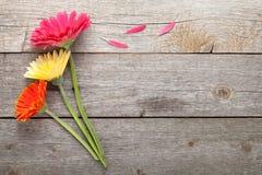 三朵五颜六色的大丁草花 免版税库存图片