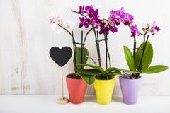三朵兰花兰花植物和心脏 免版税库存照片