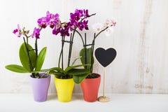 三朵兰花兰花植物和心脏 免版税库存图片