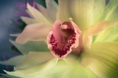 三朵兰花花束的一个兰花特写镜头在木背景概念生日美妙地装饰的开花 免版税库存图片