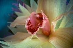 三朵兰花花束的一个兰花特写镜头在木背景概念生日美妙地装饰的开花 库存图片