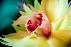 三朵兰花花束的一个兰花特写镜头在木背景概念生日美妙地装饰的开花 库存照片