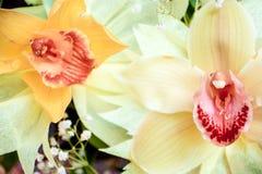三朵兰花花束的两朵兰花特写镜头在木背景概念生日美妙地装饰的开花 免版税库存照片