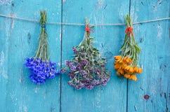 三朵在木墙壁上的医疗草本花束 免版税库存图片