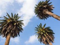 三朵棕榈云彩 免版税库存照片