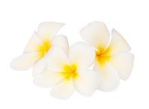三朵热带花 免版税库存图片