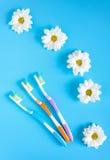 三朵牙刷和春黄菊花在蓝色背景 自然化妆用品的概念 在视图之上 免版税图库摄影
