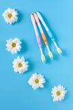 三朵牙刷和春黄菊花在蓝色背景 免版税库存图片