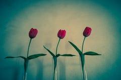 三朵玫瑰佛罗伦萨 库存图片