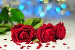 三朵玫瑰罗莎rubiginosa连续在心脏,黄色和蓝色光之间的白色桌布 免版税图库摄影