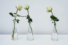三朵玫瑰 库存照片