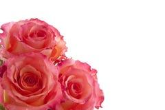 三朵玫瑰 免版税库存图片