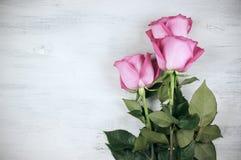 三朵玫瑰 免版税库存照片