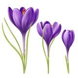 三朵花 免版税库存图片