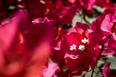 三朵白色美丽的花 免版税库存图片