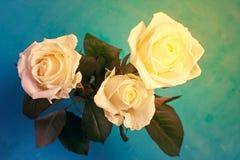三朵空白玫瑰 免版税库存图片