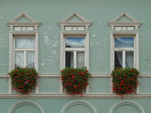 三朵窗口和花在绿色墙壁上 免版税图库摄影