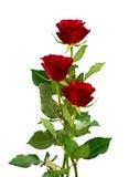 三朵红色玫瑰花浪漫花束  免版税图库摄影