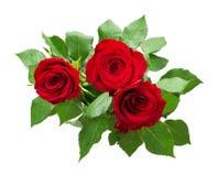 三朵红色玫瑰花花束 图库摄影