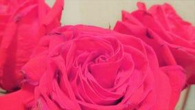 三朵红色花2 库存照片