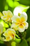 三朵花 免版税库存照片