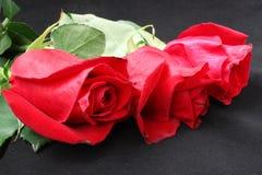 三朵芽猩红色玫瑰 图库摄影