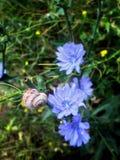 三朵蓝色花和一只蜗牛在开花从事园艺 库存照片