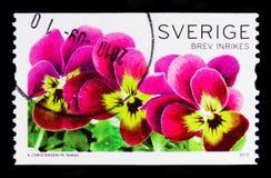 三朵蝴蝶花,植物群开花-一般serie,大约2010年 图库摄影