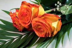 三朵黄色红色玫瑰美丽的花束  库存图片