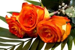 三朵黄色红色玫瑰美丽的花束  免版税库存图片