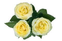 三朵黄色玫瑰 库存图片
