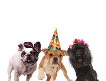 三条可爱的狗 库存图片