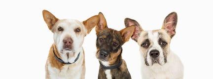 三条哀伤的抢救狗水平的倒栽跳水 库存照片