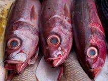 三条新鲜的异乎寻常的褐红的鱼待售在鱼餐馆 免版税图库摄影